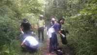 <p>  Odstranjevanje deljenolistne rudbekije; Foto: Sonja Fojker </p>
