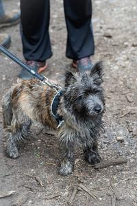 <p>  Ker so pogosti obiskovalci našega krajinskega parka tudi psi, smo bili posebno veseli, da so se akcije čiščenja udeležili tudi njihovi lastniki.<br>  <br>  foto: Luka Šparl </p>