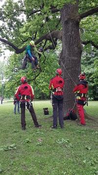 <p>  Izobraževanje iz arborističnih vrvnih tehnik; Foto: Arhiv Tisa d.o.o </p>