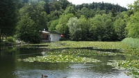 <p> Tivolski ribnik </p> <p> Foto: Luka Šparl </p>