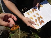 <p>  Določanje metuljev s pomočjo določevalnih ključev; Foto: Ana Pšeničnik </p>