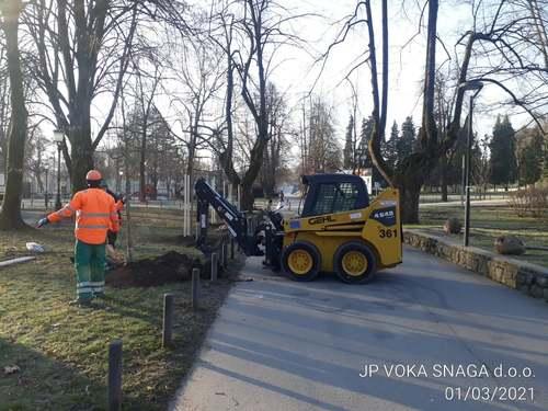 <p>  Zasaditev lip v parku Tivoli; Foto: Nejc Praznik </p>