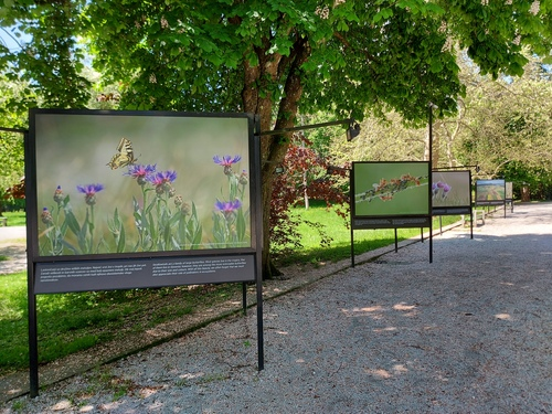 <p> Razstava Biodiverziteta Slovenije </p> <p> Foto: Mateja Nose Marolt </p>
