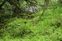 <p>  Naravni rezervat Mostec; </p> <p>  Foto: Luka Šparl </p>