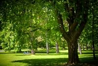 <p>  Naravni spomenik - Tivoli, mestni park; </p> <p>  Foto: Artinfoto.si </p>