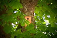 <p>  Tičistan - ljudje se tu od nekdaj srečujejo s pticami, jih hranijo ter opazujejo. </p> <p>  Foto: Artinfoto.si </p>