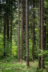 <p> Gozd v Koseškem borštu; foto: Luka Šparl (arhiv KP TRŠh)<br> </p>