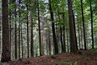<p> Strnjen gozd v Koseškem borštu; foto: Luka Šparl (arhiv KP TRŠh)<br> </p>