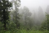 <p> Gozd v megli; foto: Saša Vochl (arhiv KP TRŠh)<br> </p>