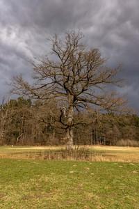<p> Osamela drevesa kot pomembni elementi krajine; foto: Luka Šparl (arhiv KP TRŠh)<br> </p>