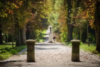<p>  Parkovni prehodi; Foto: Artinfoto.si<span> </span> </p>