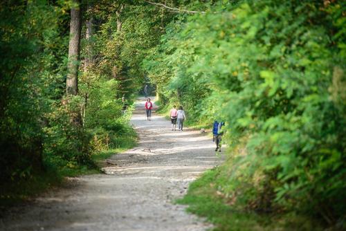 <p> Urejene poti v gozdnem prostoru; Foto: Artinfoto.si </p>
