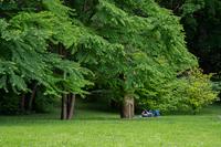 <p>  Sprostitev v parku Tivoli; Foto: Luka Šparl (Arhiv KP TRŠh) </p>